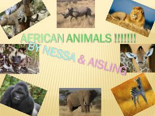 AFRICAN ANIMALS !!!!!!!