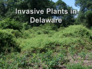 Invasive Plants in Delaware