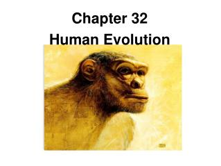 Chapter 32 Human Evolution