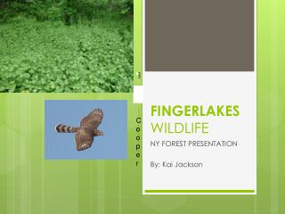 FINGERLAKES  WILDLIFE