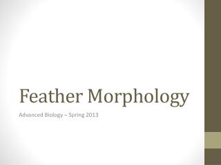 Feather Morphology