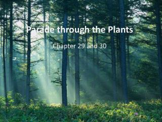 Parade through the Plants