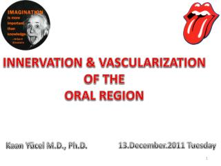 I NNERVATION & VASCULARIZATION OF THE ORAL REGION