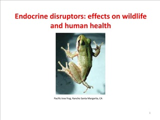 Endocrine disruptors: effects on wildlife and human health