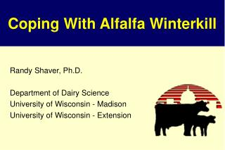 Coping With Alfalfa Winterkill