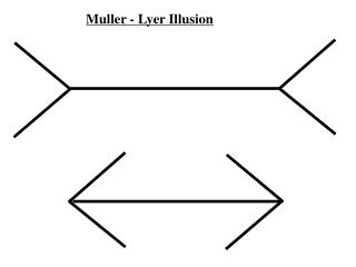 Muller - Lyer Illusion