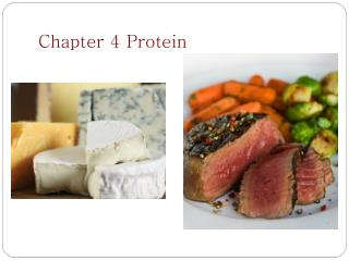 Chapter 4 Protein