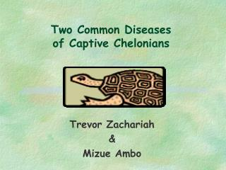 Two Common Diseases  of Captive Chelonians