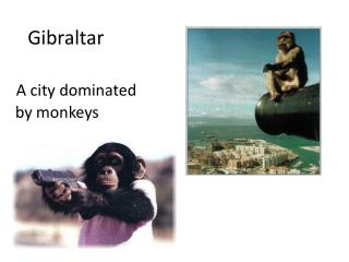 Gibraltar A  city dominated by monkeys