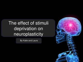 The effect of stimuli deprivation on neuroplasticity