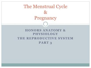 The Menstrual Cycle & Pregnancy