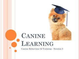 Canine Learning