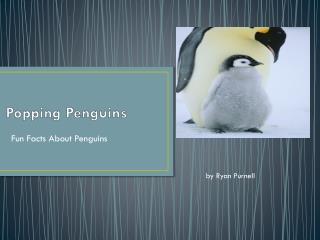 Popping Penguins