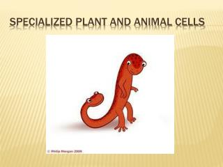 SPECIALIZED PLANT AND ANIMAL CELLS