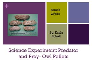 Science Experiment: Predator and Prey- Owl Pellets