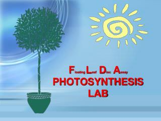 F loating  L eaf  D isc  A ssay PHOTOSYNTHESIS LAB