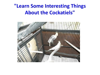 """""""Learn Some Interesting Things About the Cockatiels"""""""