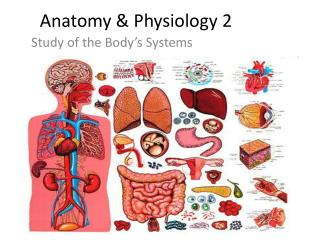 Anatomy & Physiology 2