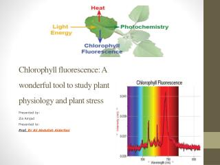 Chlorophyll fluorescence: A wonderful tool to study plant physiology and plant stress