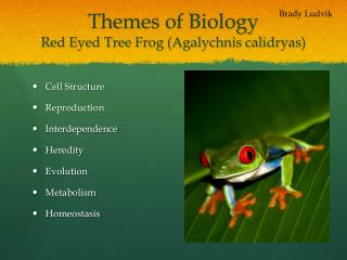 Themes of Biology Red Eyed Tree Frog ( Agalychnis calidryas )