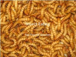 Insect Eating