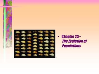 Chapter 23~                 The Evolution of Populations