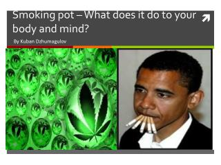 Smoking pot – What does it do to your body and mind?