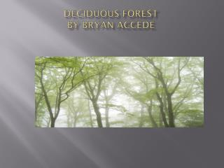 Deciduous forest  By Bryan accede