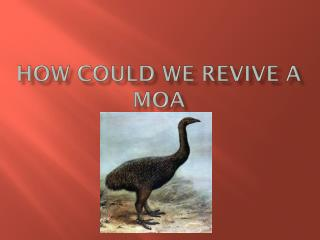 How could we revive a Moa