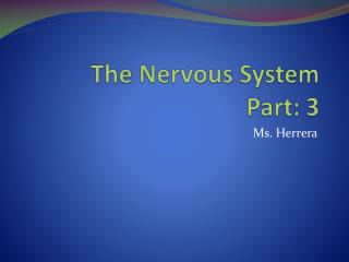 The Nervous System Part: 3