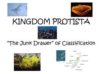 "KINGDOM PROTISTA ""The Junk Drawer"" of Classification"