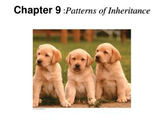 Chapter 9  : Patterns of Inheritance