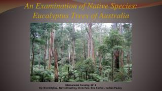 An Examination of Native Species: Eucalyptus Trees of Australia