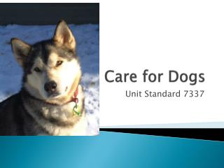 Care for Dogs