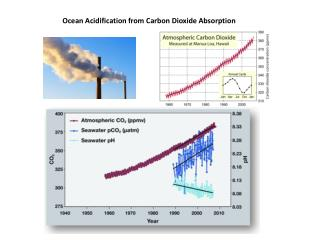 Ocean Acidification from Carbon Dioxide Absorption