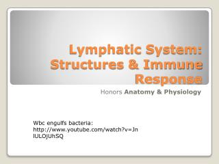 Lymphatic System: Structures & Immune Response