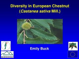 Diversity in European Chestnut Castanea sativa Mill.