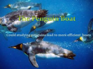 Could studying penguins lead to more efficient  boats