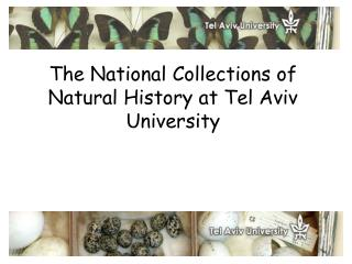 The National Collections of Natural History at Tel Aviv University