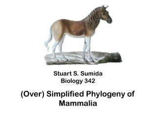 Stuart S. Sumida Biology 342 (Over) Simplified Phylogeny of  Mammalia