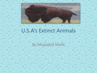U.S.A's Extinct Animals