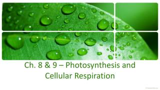 Ch. 8 & 9 –  Photosynthesis  and Cellular Respiration