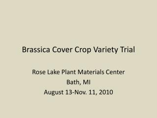 Brassica Cover Crop Variety Trial