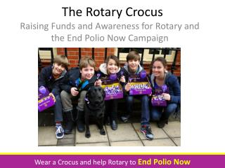 The Rotary Crocus