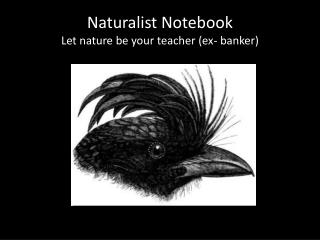 Naturalist Notebook Let nature be your teacher (ex- banker)