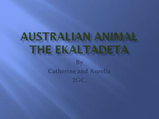 Australian Animal the Ekaltadeta