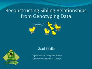 Reconstructing Sibling Relationships from Genotyping Data