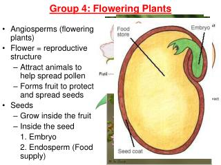 Group 4: Flowering Plants