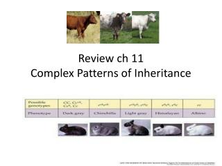 Review  ch  11  Complex Patterns of Inheritance