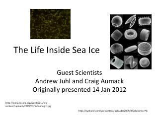 The Life Inside Sea Ice